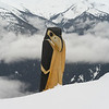 Close-up of a wooden bird sculpture, Whistler, British Columbia, Canada