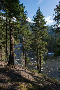 River flowing through forest, Pemberton, Whistler, British Columbia, Canada