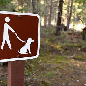 No dogs allowed sign on a pole in a forest, Pemberton, Pemberton Valley, British Columbia, Canada