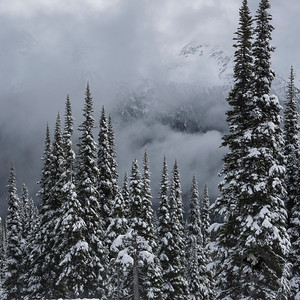 View of snow covered trees in winter, Whistler Mountain, British Columbia, Canada