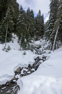 Stream flowing in snowy forest, Whistler, British Columbia, Canada