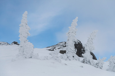 Frozen trees on snow covered mountain in winter, Whistler, British Columbia, Canada