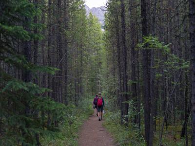 Hikers in forest, Saskatchewan River Crossing, Icefields Parkway, Jasper, Alberta, Canada