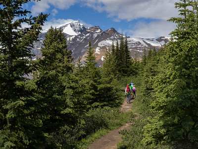 Hikers in forest, Icefields Parkway, Jasper, Alberta, Canada