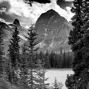 Pine trees along river in front of mountains, Athabasca River, Icefields Parkway, Jasper, Alberta, Canada