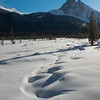 Snow covered landscape with mountain in winter, Emerald Lake, Field, British Columbia, Canada