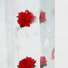 Rose frozen in an ice column, Banff National Park, Alberta, Canada
