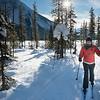Woman cross country skiing, Emerald Lake, Field, British Columbia, Canada