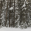 Snow covered trees in winter, Emerald Lake, Yoho National Park, British Columbia, Canada