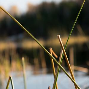 lake12522.jpg