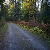 Dirt road passing through a forest, Kenora, Lake of the Woods, Ontario, Canada
