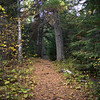 Trail through a forest, Kenora, Lake of the Woods, Ontario, Canada