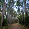 Trees along a dirt road, Kenora, Lake of the Woods, Ontario, Canada