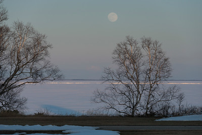 Trees at the frozen lakeside, Riverton, Hecla Grindstone Provincial Park, Manitoba, Canada