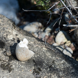Shell of a broken egg on a rock, Riverton, Hecla Grindstone Provincial Park, Manitoba, Canada