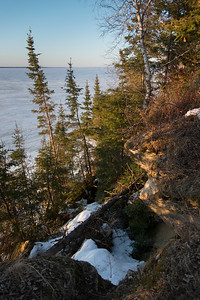 Shoreline Trees along Lake Winnipeg, Hecla Grindstone Provincial Park, Manitoba, Canada