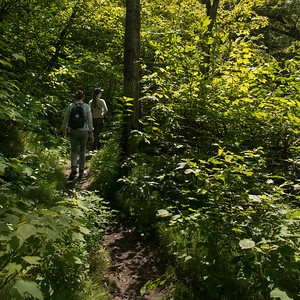 Tourists in a forest, Riding Mountain National Park, Manitoba, Canada