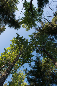 Low angle view of trees, Riding Mountain National Park, Manitoba, Canada