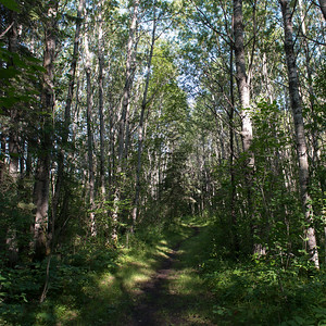 Trees both sides of a dirt road, Riding Mountain National Park, Manitoba, Canada