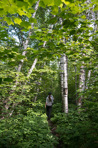 Tourists walking in a forest, Riding Mountain National Park, Manitoba, Canada