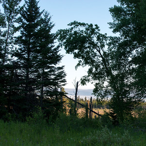 Trees in a forest, Lake Audy Campground, Riding Mountain National Park, Manitoba, Canada