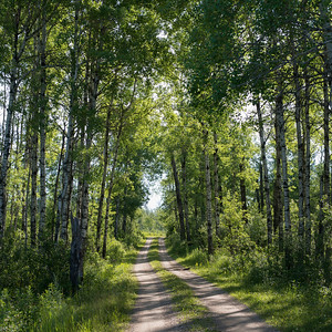 Trees both sides of a dirt road, Lake Audy Campground, Riding Mountain National Park, Manitoba, Canada