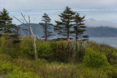 Trees along coast, Dingwall, Cabot Trail, Cape Breton Island, Nova Scotia, Canada