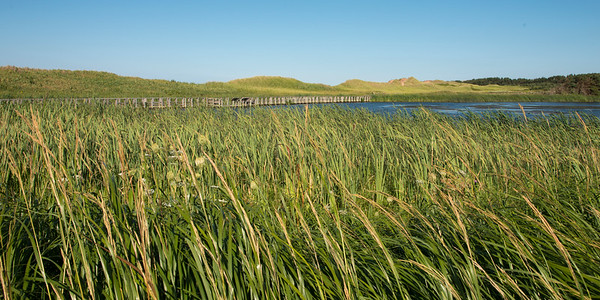 Grass on marsh at Cavendish Dunelands Trail, Green Gables, Prince Edward Island, Canada