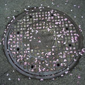 Toronto street manhole cover, Toronto, Ontario, Canada
