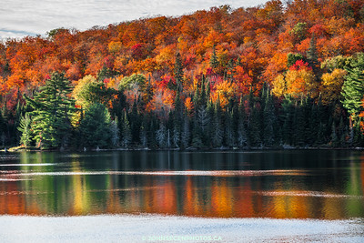 Autumn At Algonquin Park