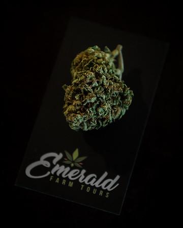Emerald Farm Tours - Meadow