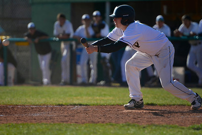 Tigers junior Brad Cutter bunts against Palmer Thursday at Justin Field. Jeff Shane/ Daily Record