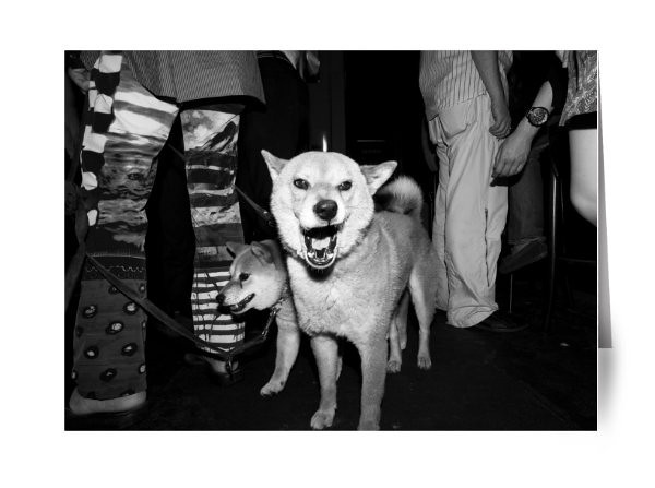 "Dogs in an Irish Pub<br /> <br /> Shibuya is famous for its young vibrate visitors, the statue of Hachiko and the scramble crossing.  As many as 2,500 people cross at one time.  It can be quite an experience to be in the middle of all of this movement of people. <br /> <br /> Shibuya is one of the most exciting places in Tokyo and has been featured in many famous movies such as Lost in Translation, The Fast and the Furious, and Resident Evil.  <br /> <br /> Read about Shibuya on ShootTokyo:<br />  <a href=""http://shoottokyo.com/category/shibuya-2/"">http://shoottokyo.com/category/shibuya-2/</a>"