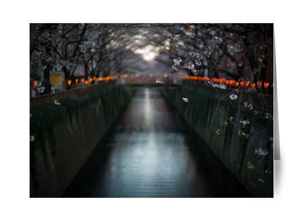 """Cherry Blossoms on Meguro River<br /> <br /> For my first 8 years in Tokyo I lived in Nakameguro and right near Meguro River which is famous for Cherry Blossoms.   April is one of the best time of the year in Tokyo as the city turn pink with Cherry Blossoms everywhere you look.  It is a break taking scene.<br /> <br /> For me it becomes a week of lots of photography. <br /> <br /> Read about the rest of this day on ShootTokyo:<br />  <a href=""""http://shoottokyo.com/shooting-the-cherry-blossoms/"""">http://shoottokyo.com/shooting-the-cherry-blossoms/</a>"""