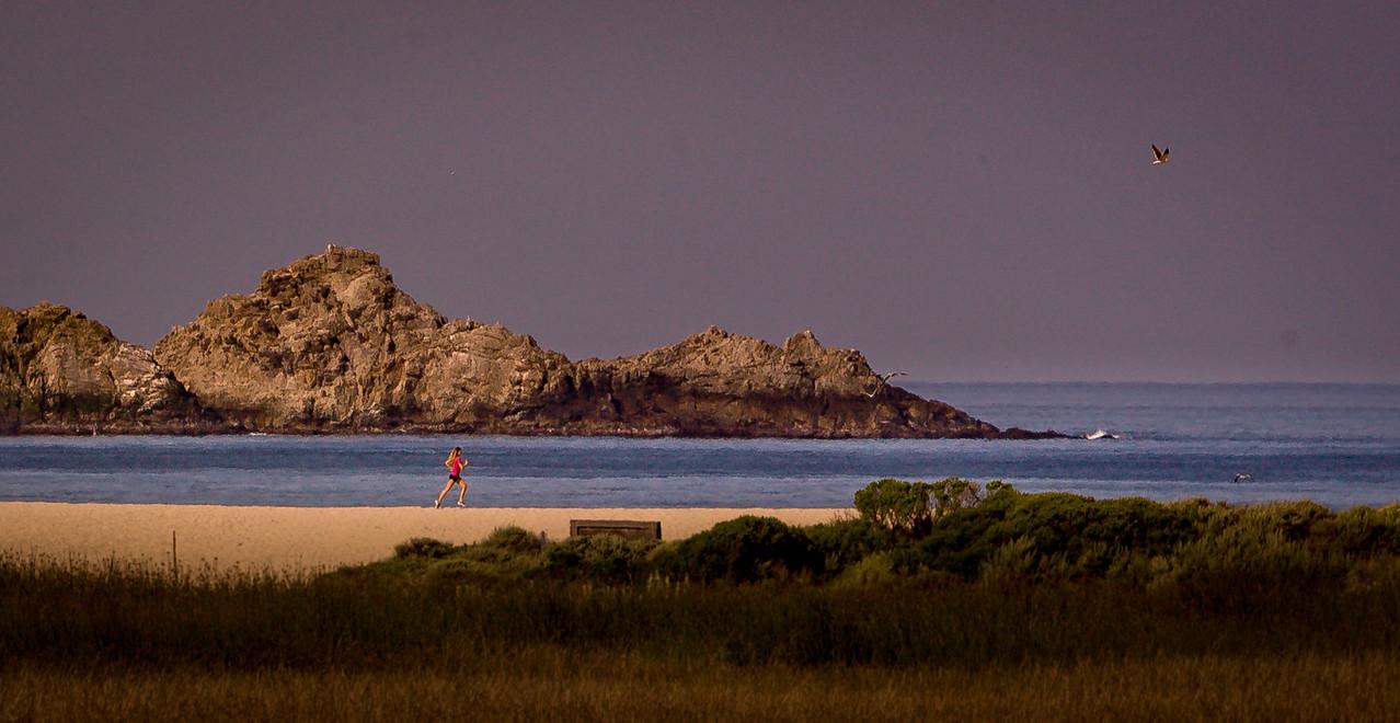 Run on Carmel River Beach, Pt Lobos background