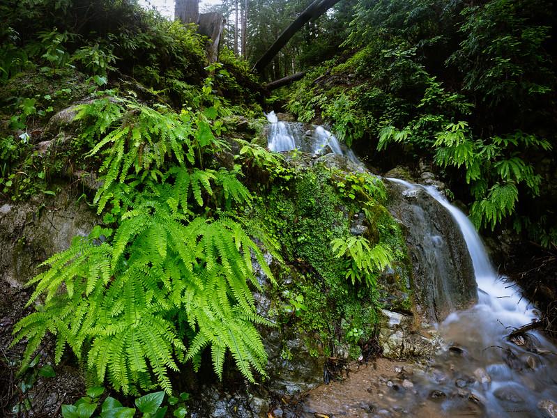 Big Sur Ferns and Falls