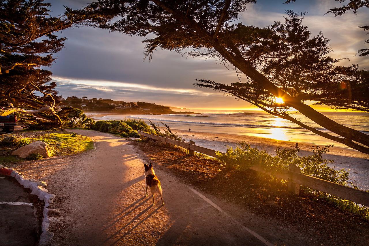 Scenic Drive walk, dog heaven