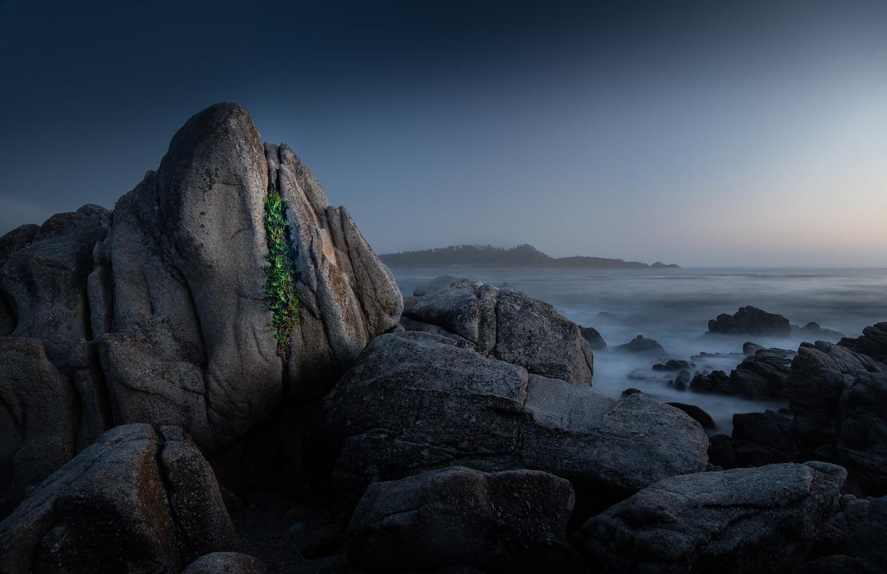 Iceplant and rocks, Carmel Point
