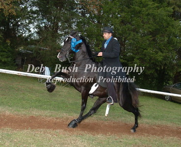 CLASS 24  FOUR YR OLD AMATEUR SPECIALTY
