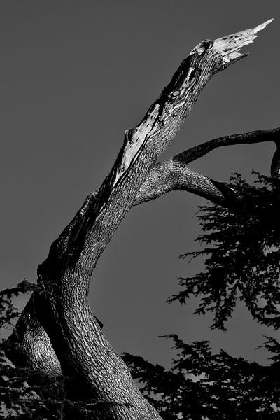 plops last branch