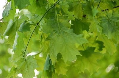 Summer greens