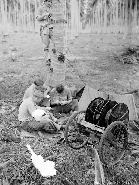 Communication personnel of US Marines on Guadalcanal lay a telephone line through a coconut grove.