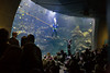 Philippine Coral Reef Aquarium
