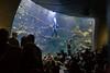 Philippine Coral Reef Aquarium