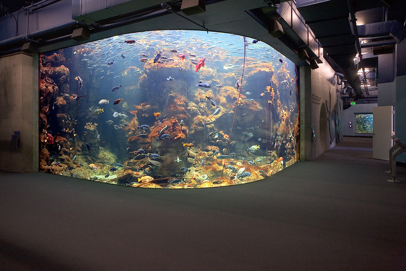 California Rocky Reefs tank