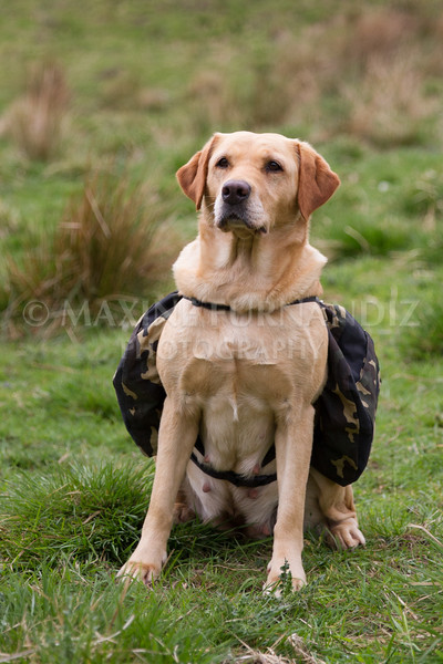 Intermediate Gundog May 2016-5044