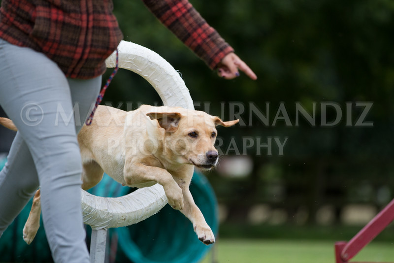 Dawns Agility 14 August 2016-2097