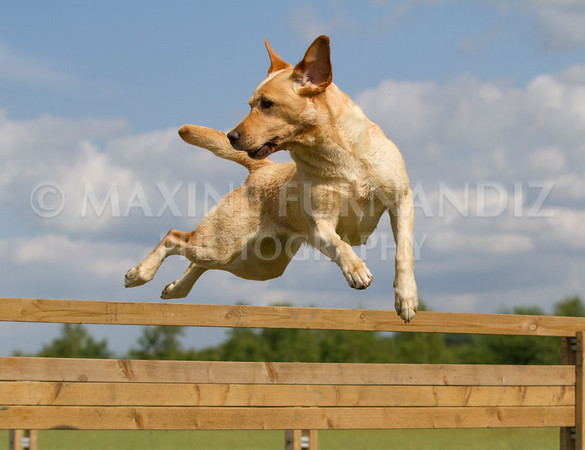 BEginners Gundog July 2015 (360 of 409)