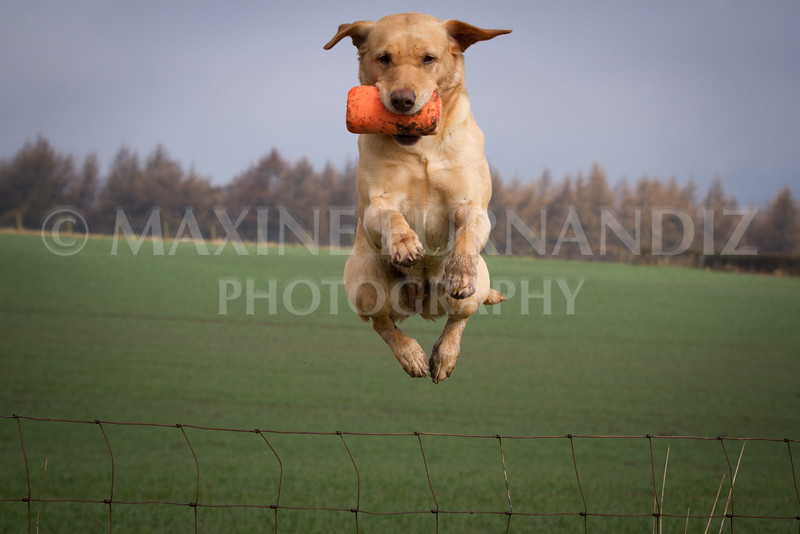 Intermediate Gundog March 2015 (2 of 214)