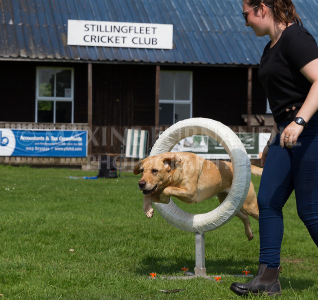 Dawn Agility 5 June-6476
